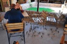 Enquanto você come, é acompanhado por pássaros esfomeados
